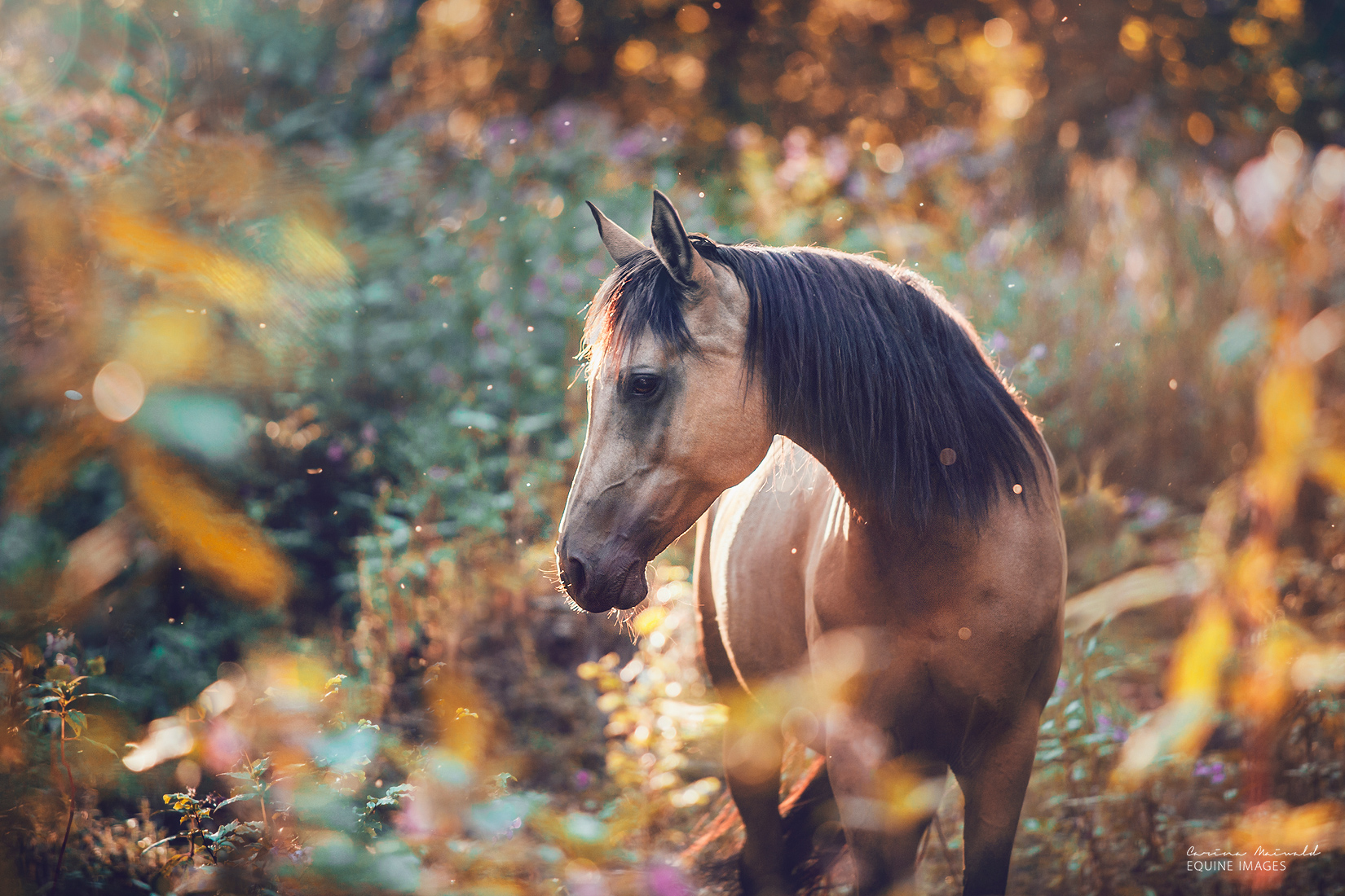 Carina Maiwald Equine Photographer
