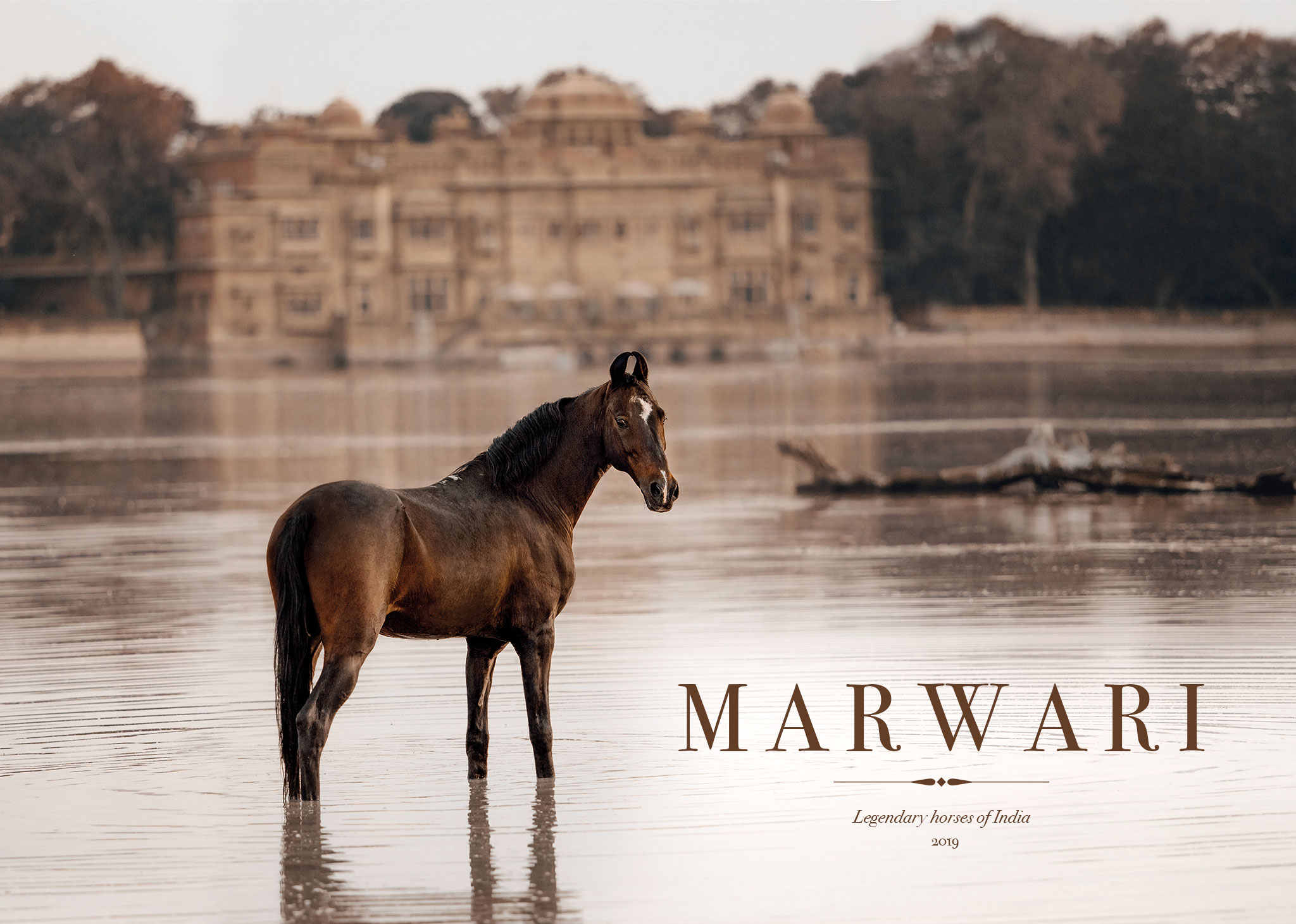 01-slideshow-marwari